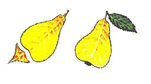 Груша из осеннего листика