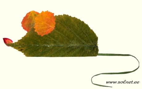 Мышь из осенних листьев