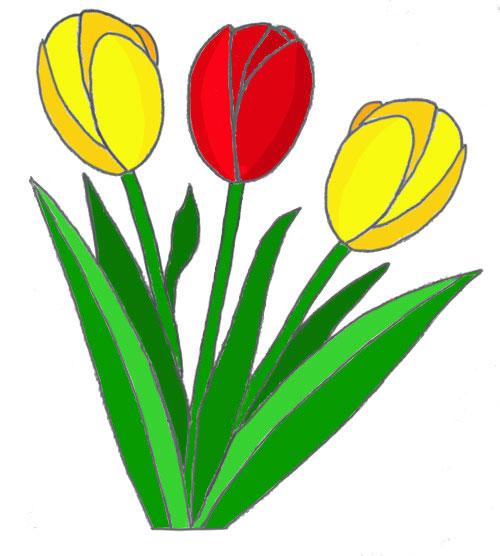 Рисуем тюльпан