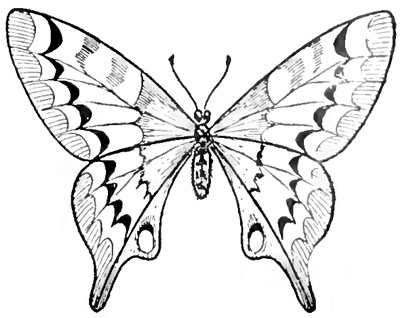 Научимся рисовать бабочку