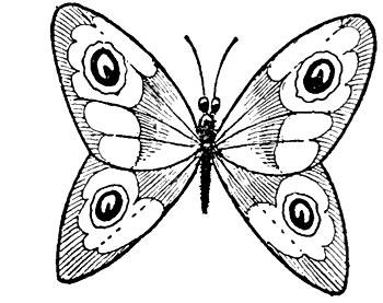 учимся рисовать бабочек уроки рисования для детей