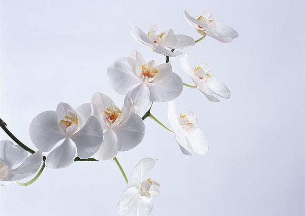 Вот так выглядят настоящие орхидеи