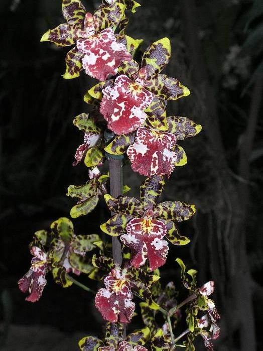 цветы архидея фото