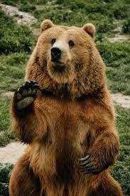 скачать игру про медведя