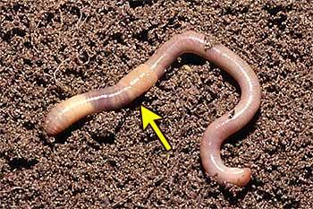 откуда появляются черви в организме человека
