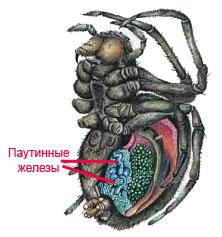 Причина образования папиллом в горле