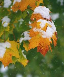 Платье сбрасывающие листья