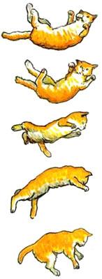 Кошки всегда приземляются на четыре