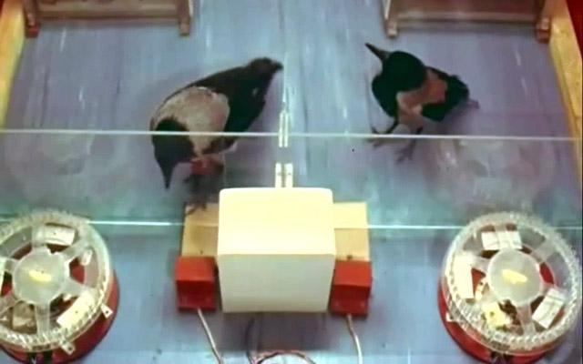 Киножурнал «Хочу всё знать». Выпуск 113 (1977)